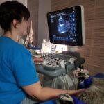 Терапия домашним животным