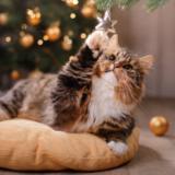 cats-ny