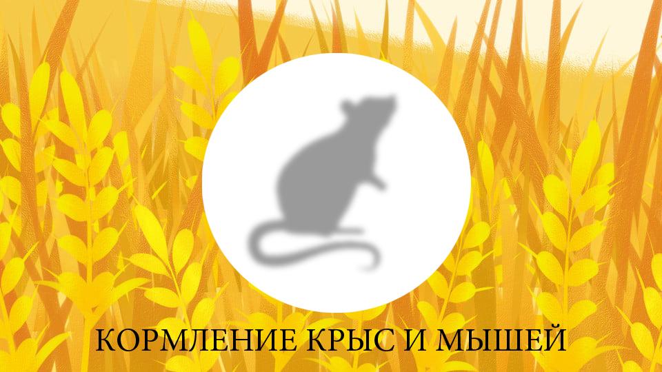 pngtree-sunny-fresh-wheat-advertising-background-backgroundplantwheat-earswheat-fieldhand-image_54345