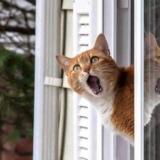 okna_i_balkony_bezopasye_dla_koshek_23_1456827493