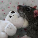 лежанки для крысы