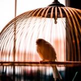В домах живут не только попугаи