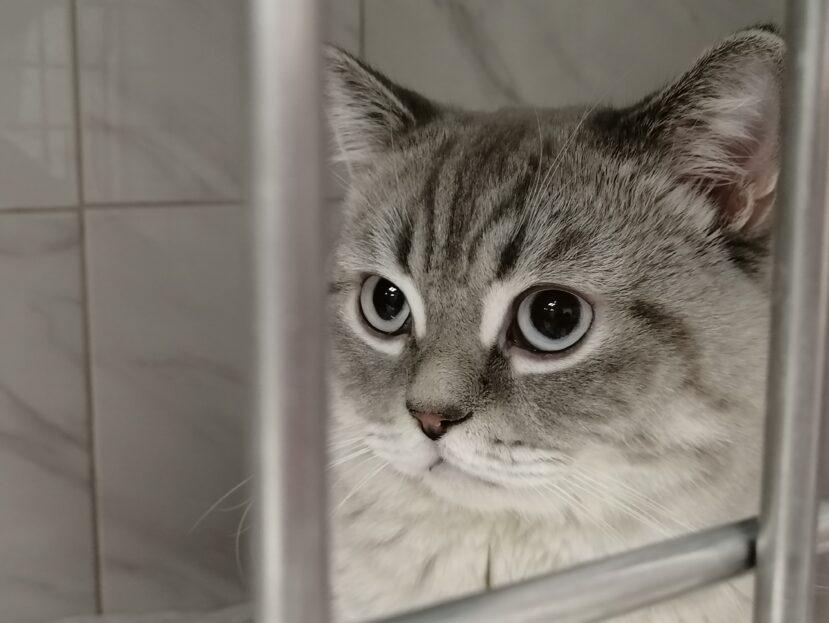 Уретростомия у кота