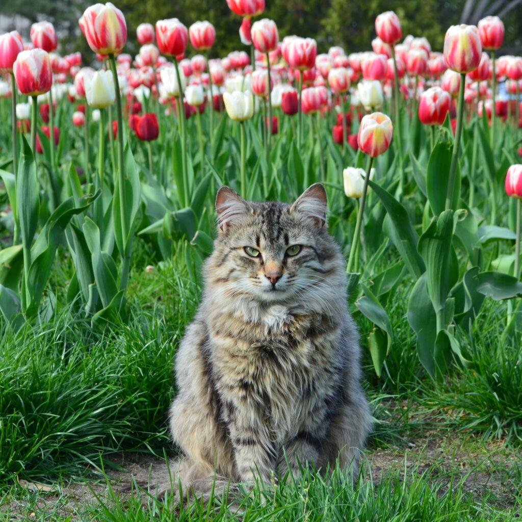 Какие вещества делают тюльпаны ядовитыми